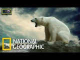 Суперхищники. Полярный Медведь. Документальные фильмы National Geographic. Nat Geo WILD HD