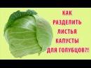 Как снять листья с капусты для голубцов быстро и легко за 5 минут видео рецепт. Готовим дома.