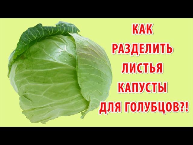 Как снять листья с капусты для голубцов быстро и легко за 5 минут (видео рецепт). Готовим дома.