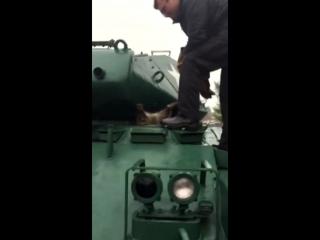 Енот и танк