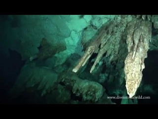 Пещерный дайвинг Сенот Дос Охос Dos Ojos Два Глаза полуостров Юкатан, Мексика 720