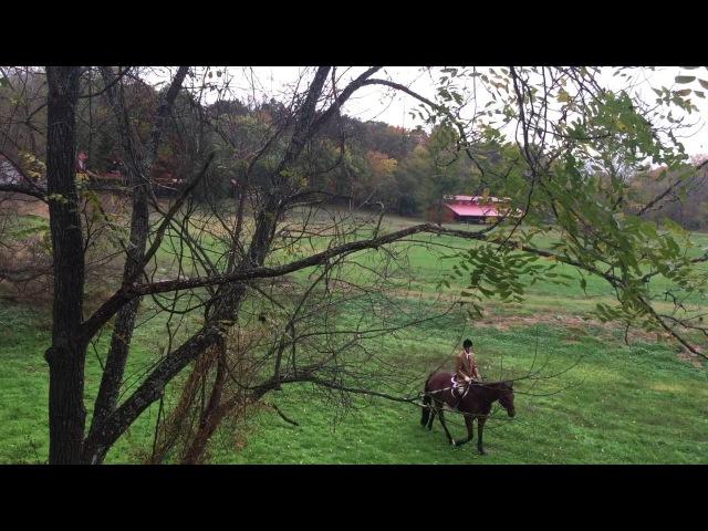 Верховая охота на лис с гончими в штате Вирджиния США
