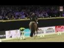 Jumping Mechelen Isabel Cool en Constand Freestyle