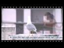 Türkiye Ekonomi Bankası Reklam Filmi   Tenis Her Yerde