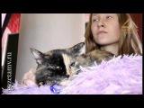 #ХэлоуВоркута | В Воркуте прошла выстака кошек