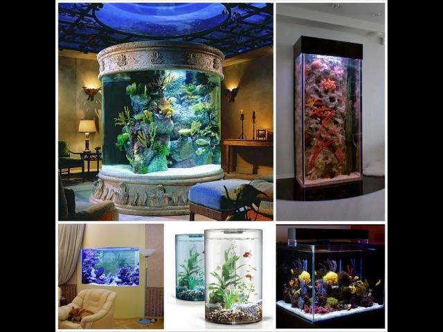 Animal planet Лучшие аквариумы земли