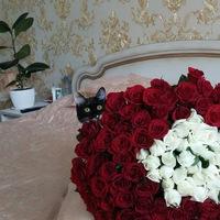 Светлана Шаменкова-Семенова