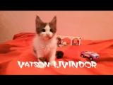 Vatson Livindor продается все вопросы 89133067682 (вибер,вацап)