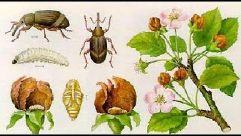 Первые насекомые вредители и борьба с ними.