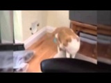 Fat Cat   A Funny Fat Cats vs Doors Compilation  2016  YouTube reacted by funny video universe