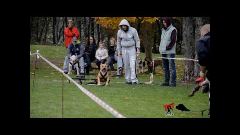 AMSTAFF TEAM LATVIJA PIT STAFS powerdog 2 posms
