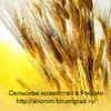 Подворье - группа о сельском хозяйстве в России.