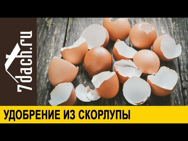 Удобрение из яичной скорлупы - 7 дач