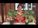Почему опадают цветы у баклажанов Искусственное опыление