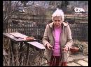 Как правильно подрезать смородину Голова садовая
