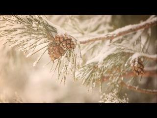 Картинки корнелии чародейкою зимою