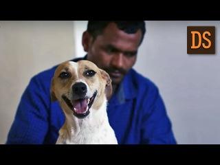 Мужчина 10 лет копил деньги, чтобы помочь бездомным животным. На жестовом языке