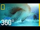 360° Great Hammerhead Shark Encounter National Geographic