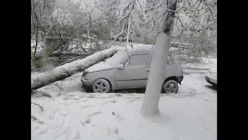 Апрель в Запорожье: падающий снег и... деревья