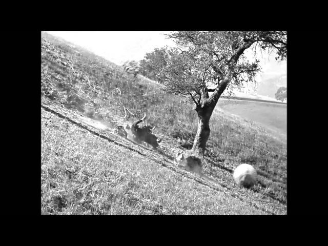 Buster Keaton - « Seven Chances »
