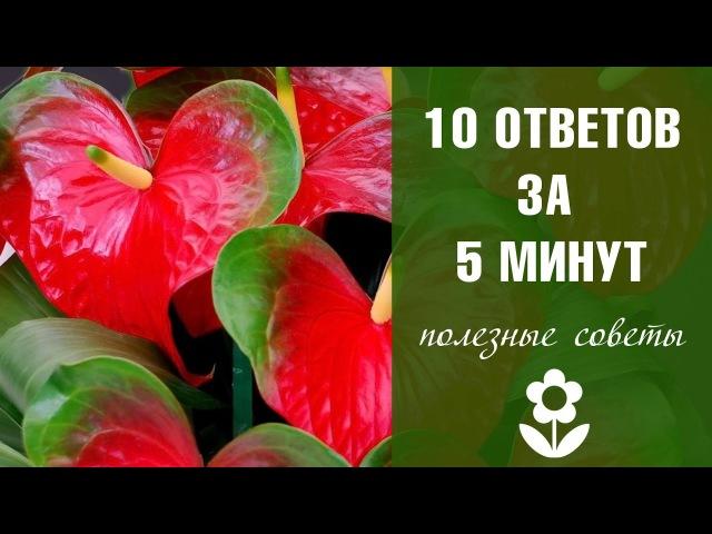 Хитсад ТВ - Антуриум домашний уход ❀ Комнатные растения и цветы как выращивать