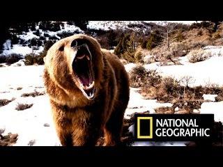 Самый крупный в мире баран/Самая редкая птица/Волк/Амфибия/Якутия/Байкал/Сибирь/Дикая природа России