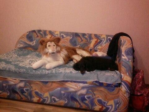 #ДляДомаИДачи@bankakomi Продам диван,односпальный, раскладывается в д