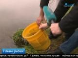 Телеканал «Санкт-Петербург» — Новости — Рыбак — рыбакам- глава Приморского района выпустил больше трех тысяч мальков в озеро Дол