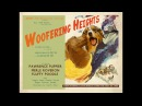 Woofering Heights: a film to help relax dogs stressed by fireworks and loud noises