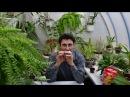 О корневом червеце. Защита растений, ядохимикаты. Правила для успешного уничтож