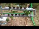 Гидропоника.новая клубника новое удобрение