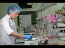 Изготовление плавленного сыра Технологический факультет УрГАУ