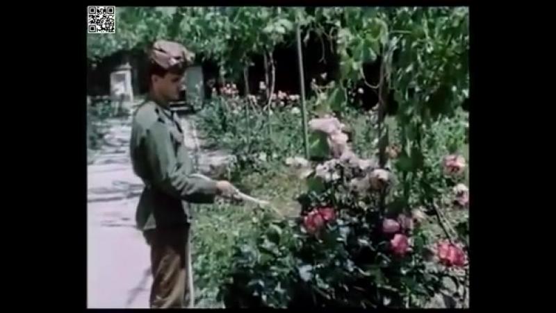 Строго секретен учебен филм за Граничните войски на МВР от времето на Тодор Живков