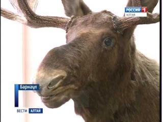 Вести Алтай 31.10.2016 1440