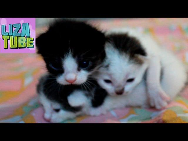 КОТЯТА ❤ Нашли на помойке еще слепых котят (=^・ェ・^=)