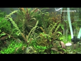 The Art of the Planted Aquarium 2015 - Scaper's Tank (Nano) category, part 7 - YouTube
