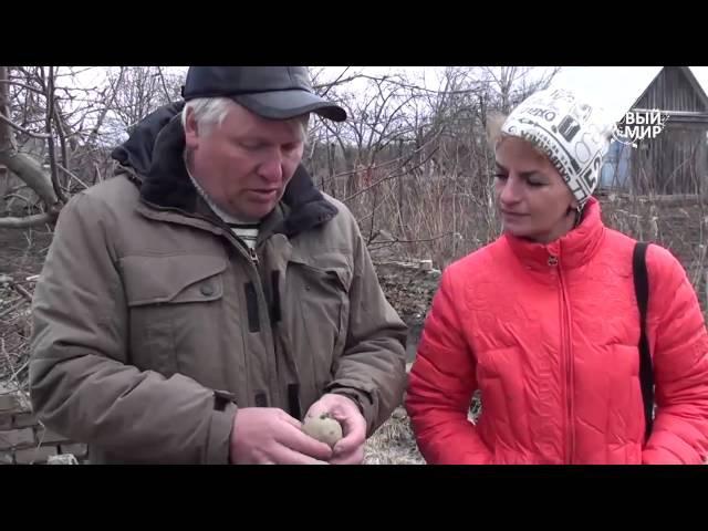 Как выращивать картофель. Часть 1 Подготовка клубней к посадке