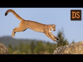 Почему кошки всегда приземляются на лапы? На жестовом языке