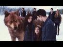 Dreadwing - Клип на фильм Сумерки ОБОРОТНИ