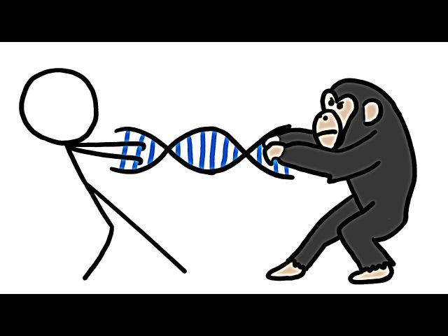 На сколько процентов мы шимпанзе? yf crjkmrj ghjwtynjd vs ibvgfypt?