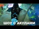 Шоу акул Дрессировка акул Кормление акул в Океанариуме ТРК Планета Нептун СПб ВИДЕО Санкт Петербург