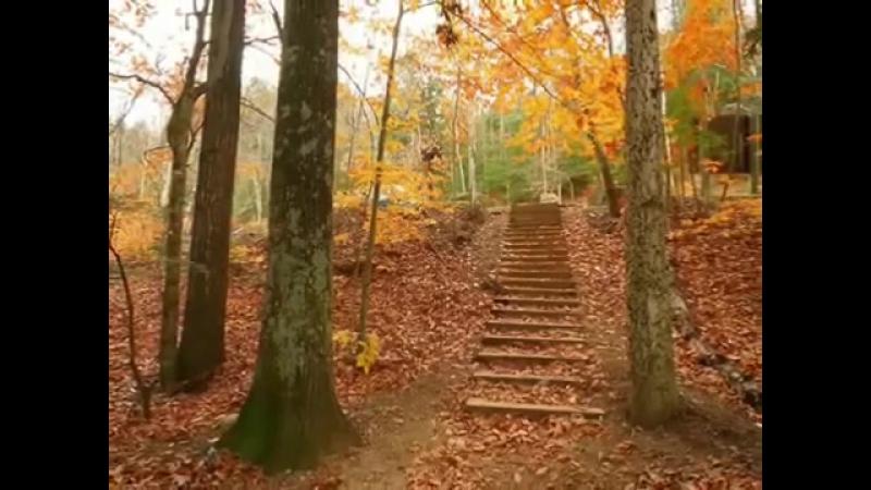Листья желтые над городом кружаться
