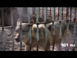 Волчьи законы: развенчиваем мифы