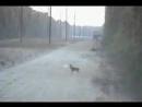 Охотник на оленей 85 уровня (6 sec)