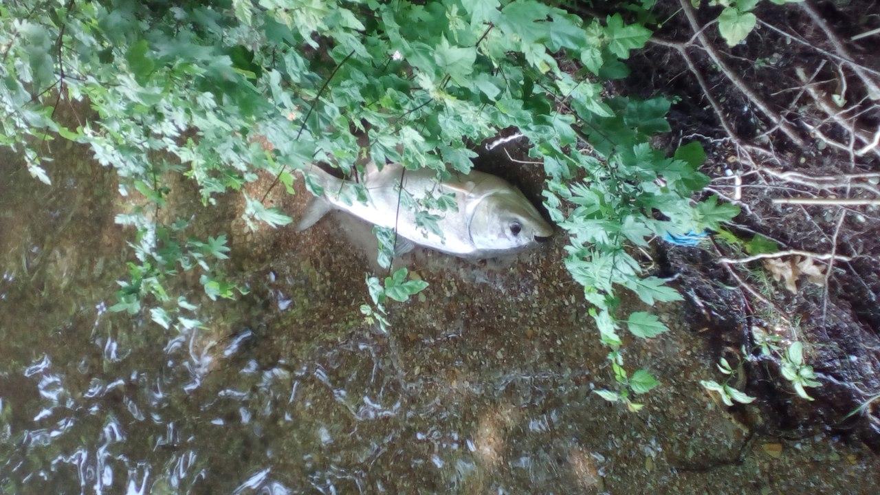 Рыбная катастрофа на Харьковщине (ФОТО)