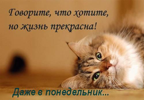 https://pp.vk.me/c626819/v626819745/1c9bc/m6kdHk6Kstc.jpg