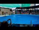 Дельфинарий в Адлере, выступление часть какая то 1...