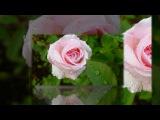 Розовый вальс любви - Евгений Дога