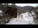 Беркут против белоголового орлана