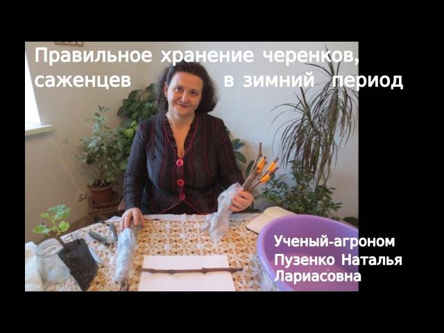 Правильное хранение черенков и саженцев зимой- рекомендации